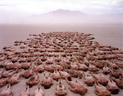 spencer tunick 2000 nevada